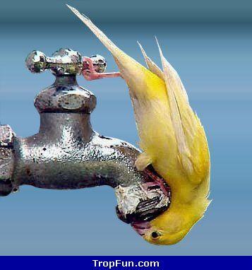 robinet oiseau